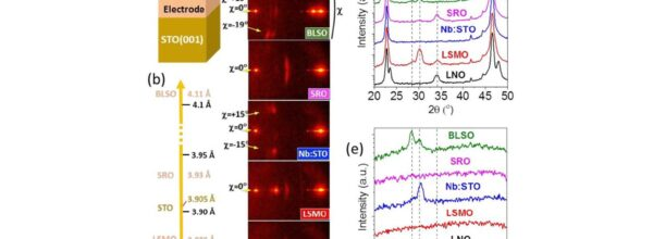 Critical Effect of Bottom Electrode on Ferroelectricity of Epitaxial Hf0.5Zr0.5O2 Thin Films